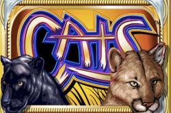 cats - slot machine